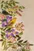 Mostra di Pittura di   Lia Viliani