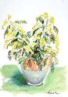 Quadro di  Luigi Pignataro - Mimose Óleos papel