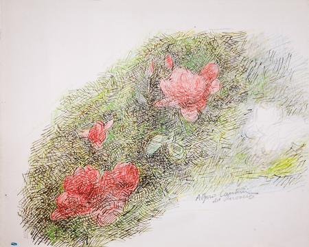 Art work by Algero Cantini Rose rosse - pastel paper
