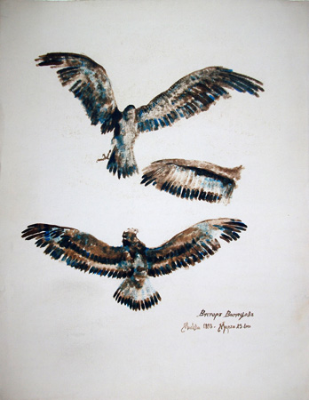 Art work by firma Illeggibile Aquila - watercolor paper