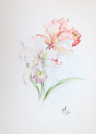 Art work by T. Valentini Orchidea - watercolor paper