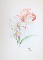 Quadro di T. Valentini  Orchidea