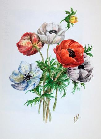 Quadro di T. Valentini Papaveri bianchi e rossi - acquerello carta