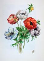 Quadro di T. Valentini  Papaveri bianchi e rossi