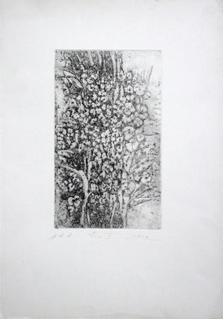 Quadro di Raffaello Lopez Fiori III - litografia carta