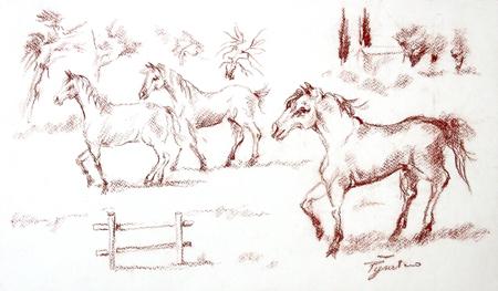 Quadro di Luigi Pignataro Cavalli - sanguigna carta