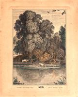 Quadro di  Antiquariato - Buoi lungo il fiume litografia carta