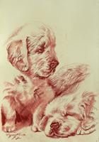 Work of Luigi Pignataro  Cani